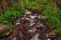 South San Juan Wilderness, creek, foliage,  CO , Colorado