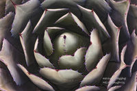 Scottsdale, Tempe, flora, agave, macro, abstracts, Sonoran, desert