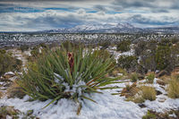 snow, snowstorm, New Mexico, NM, nature, desert, majestic, agave, blooming, spectacular, Bandalier National Monument
