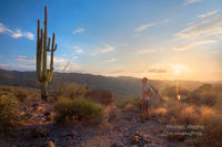 hiker, Picketpost Mountain, Superior, AZ, Arizona, saguaro, Boyce Thompson Arboretum, Superior
