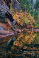 reflections, fall, AZ, Arizona, Coconino National Forest, Sedona, West Fork Oak Creek Canyon