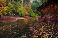 subway, autumn, AZ, Arizona, Coconino National Forest, Sedona, West Fork Oak Creek Canyon, creek