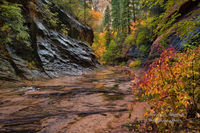trail, autumn, AZ, Arizona, West Fork Oak Creek Canyon, Sedona, colors, rainy