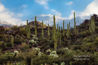 AZ, snow, beautiful, Four Peaks Wilderness, Tonto National Forest, Arizona, morning, storm, Fountain Hills, saguaros