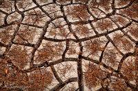 mud cracks, leaves, big bend national park, puzzle, texas