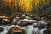autumn, colorful, foliage, rapids, boulders, creek, Big Creek Trail, Blue Ridge Mountains, Appalachian Mountain, Great Smoky Mountains National Park, TN, NC, North Carolina