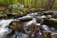 big hunting creek, md, cunningham falls state park, spring, afternoon