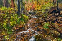 Horton Creek, Tonto National Forest, Payson, Mogollon Rim, mountain, color, autumn, AZ, Arizona