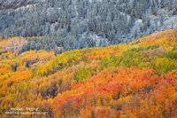 autumn, color, Gunnsion National Forest, CO, Colorado, Crested Butte, snow, mountains, light