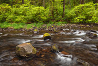 Silver Falls, State Park, Silver Creek, OR, Oregon, yellow, green, spring, peak, water, scene