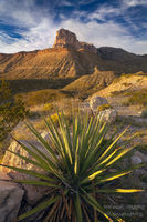 Texas, TX, Guadalupe Mountains, El Capitan, peak, escarpment, agave, mountains, star, afternoon