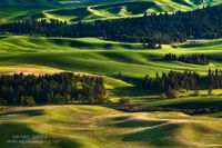 Palouse, Washington, landscape, green, golden, light, Kamiak Butte County Park, WA