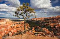 Bryce Canyon National Park, Utah, UT, clouds, tree