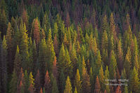 mountainside, conifers, South San Juan Wilderness, Platoro, CO, Rio Grande Wilderness, fly-fishing