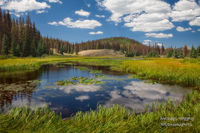 Lily pond, mountainside, conifers, South San Juan Wilderness, Platoro, CO, Rio Grande Wilderness, fly-fishing