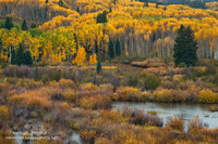 wetlands, forest, Kebler Pass, mountain, Crested Butte, CO, Colorado, Gunnison National Forest, autumn