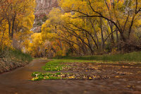 cottonwood, creek, silence, canyon, Galiuro Mountains, Arizona