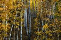 autumn, forest, red mountain pass, views, scene, leaves, aspen, October, San Juan National Forest, Colorado, CO, yellow