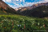 yankee boy basin, co, Colorado, Governor Basin, Uncompahgre National Forest, alpine