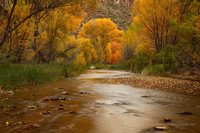autumn, Coronado National Forest, Galiuro Mountains, AZ, Arizona, Aravaipa Canyon, wilderness