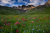 wildflowers, American Basin, CO, light, sunrise