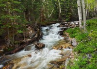 baker creek, Nevada, NV, June, watershed, aspen trees, water, streams, beautiful, great basin national park