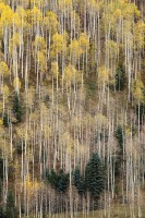 aspen, fall, colorado, san juan mountains, abstract, mountains, telluride, co