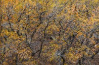 foliage, chiracuhua mountains, arizona, az, coronado national forest, abstract