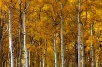 Showy Colorado: Photographing Southwestern Colorado in Autumn