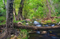 Arizona, AZ, Fossil Springs, wilderness, streams, canyon, October, Coconino National Forest, beauty