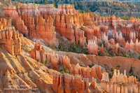 Bryce Canyon National Park, hoodoos, UT, Utah, Bryce Amphitheater, Inspiration Point, Bryce Canyon City, glow