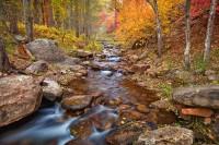 light, foliage, horton creek, spring, oasis, fall, payson, arizona, az