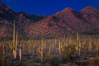 Sonoran Desert (Sign up for Autumn 2019)
