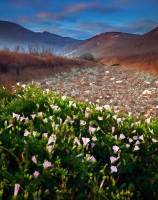 Channel Islands National Park, CA, California, Santa Cruz Island, California Morning Glory, fog, winter, isolation,