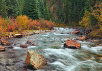 San Juan National Forest, Animas River, Silverton, CO, Colorado, foliage