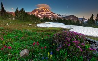 wildflowers, Mount Rainier, Spray Park, Washington, WA, Liberty Cap, flowers, sunset, snow, Magenta Indian Paintbrush, M