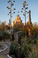 tovrea castle, phoenix, az, cactus garden, sunrise, city, volunteers