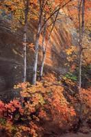 fall colors,autumn,zion national park,sandstone,color,utah,ut