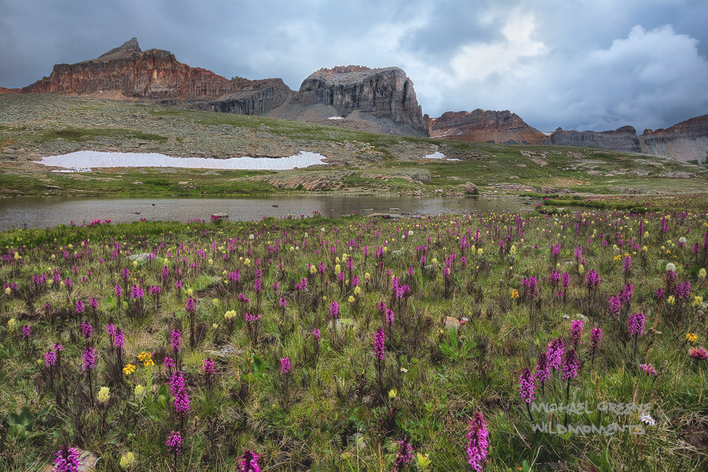 Fuller Lake, Ice Lake Basin, CO, elephant flowers, yellow paintbrush, the Lorax