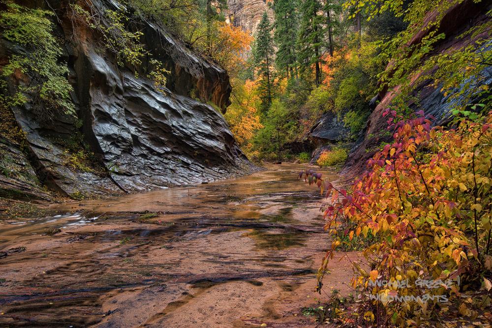 trail, autumn, AZ, Arizona, West Fork Oak Creek Canyon, Sedona, colors, rainy, photo