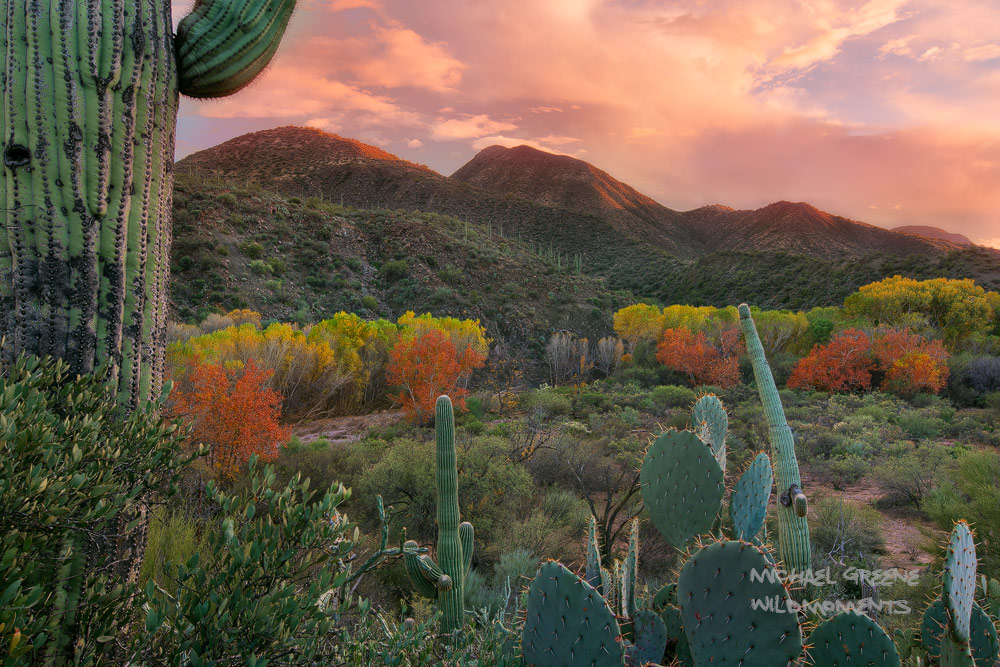 sonoran, galiuro mountains, arizona, aravaipa canyon, autumn, sunset, saguaro, prickly pear, cacti, photo