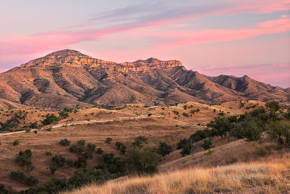 A beautiful pink desert sunset as seen from Ruby Road in the Coronado National Forest outside of Nogales, AZ.