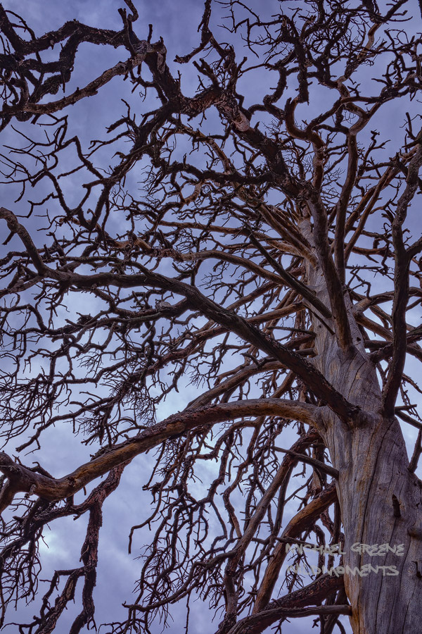 Las Cruces, Organ Mountains-Desert Peaks National Monument, Organ Mountains, hike, abstract, tree, ponderosa pine, Obama, NM, New Mexico, photo