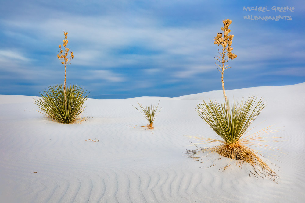 Yucca, surreal, light, NM, New Mexico, Alomogordo, New Mexico, White Sands National Park, Tularosa Basin, NM, photo