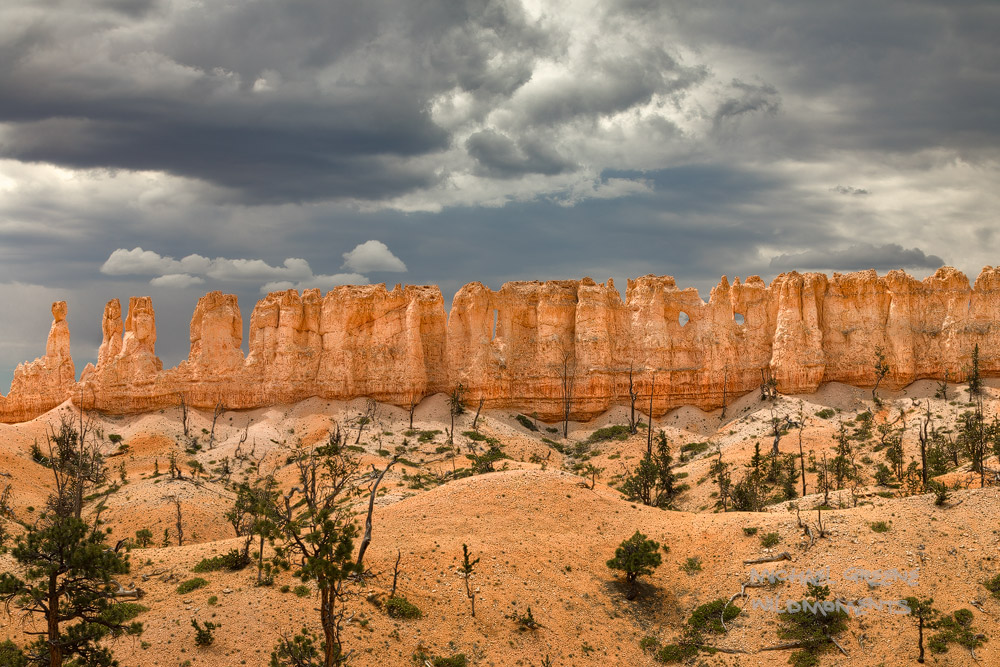 Stormy-midday light illuminates a wall of hoodoos along a high point of the Fairyland Loop Trail in Bryce Canyon National Park...