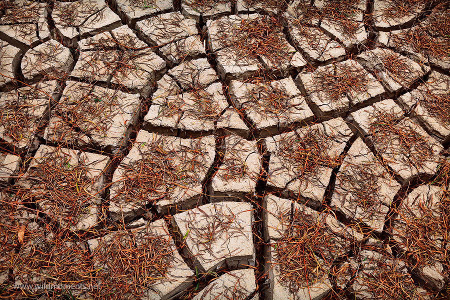 mud cracks, leaves, big bend national park, puzzle, texas, photo