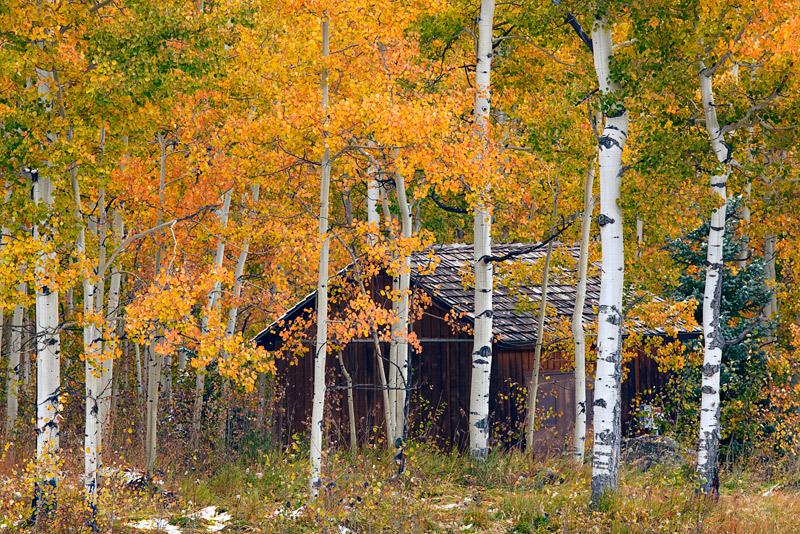 Seasonal Solitude | Uncompahgre National Forest, Colorado ...