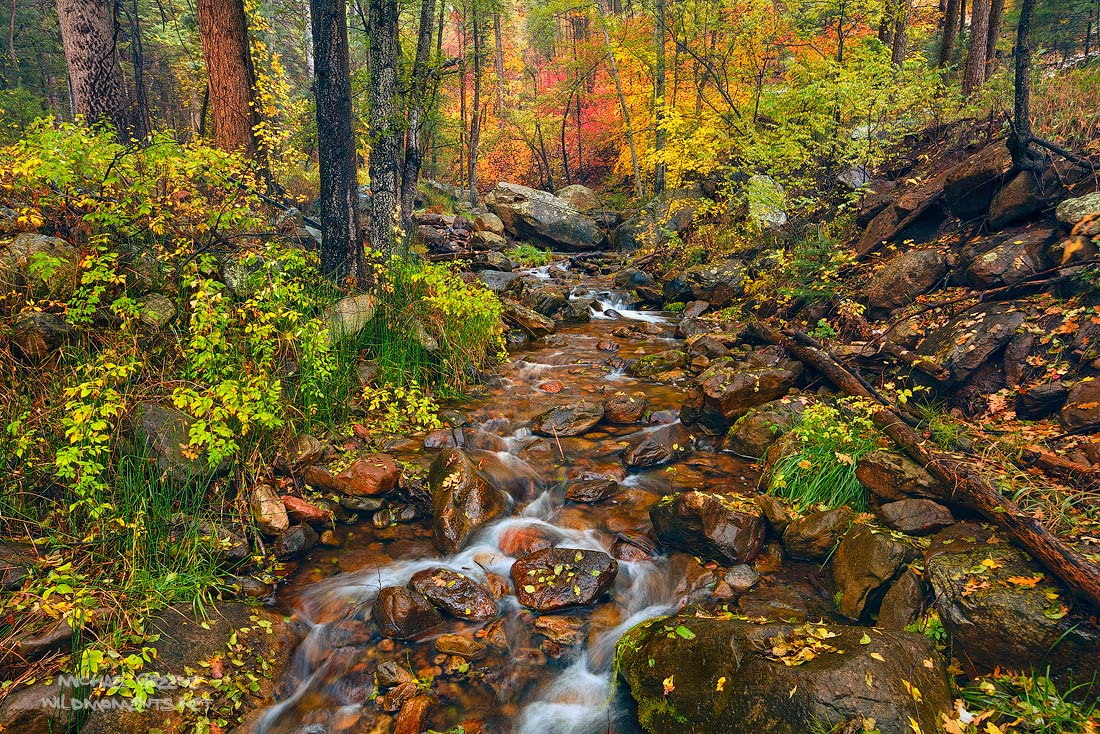 Horton Creek, Tonto National Forest, Payson, Mogollon Rim, mountain, color, autumn, AZ, Arizona, photo