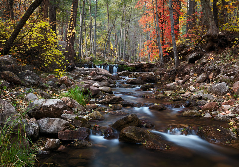 horton creek, peak foliage, tonto national forest, AZ, november, creek, foliage, photo