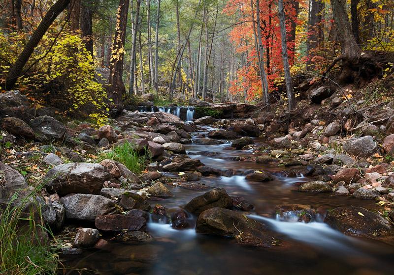 horton creek, peak foliage, tonto national forest, AZ, november, creek, foliage, photo